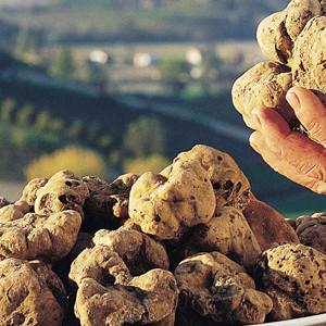 Fresh White Italian truffles