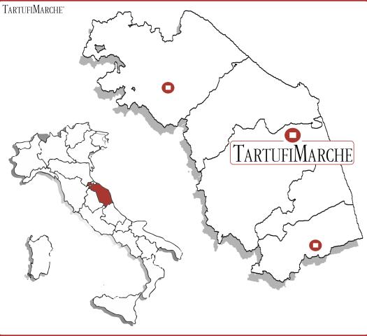 Truffle Contacts Vendor Italian Truffles