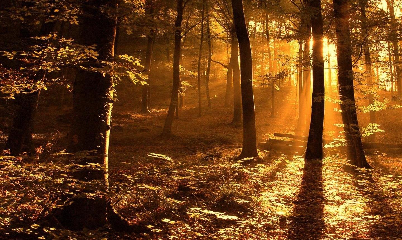Autumn-Forest-Wallpaper-HD1