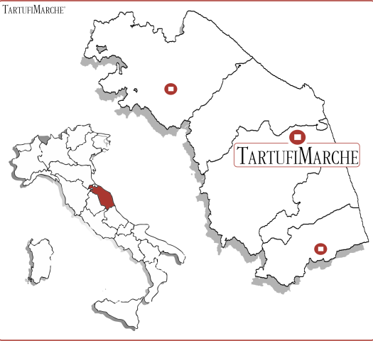 Contatti Tartufi Fornitore Tartufi
